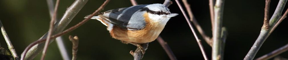 Artenvielfalt im Naturparadies Teutenberg - Kleiber