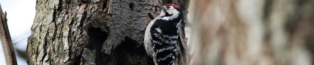 Artenvielfalt im Naturparadies Teutenberg - Kleinspecht