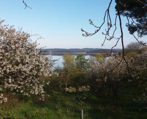 Blütezeit auf dem Bio-Obsthof Teutenberg