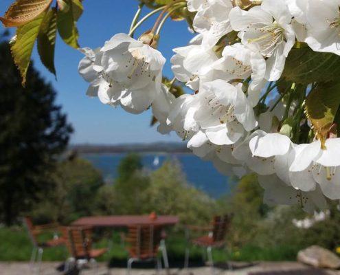 Blütenpracht an der Terrasse im Naturparadies Teutenberg