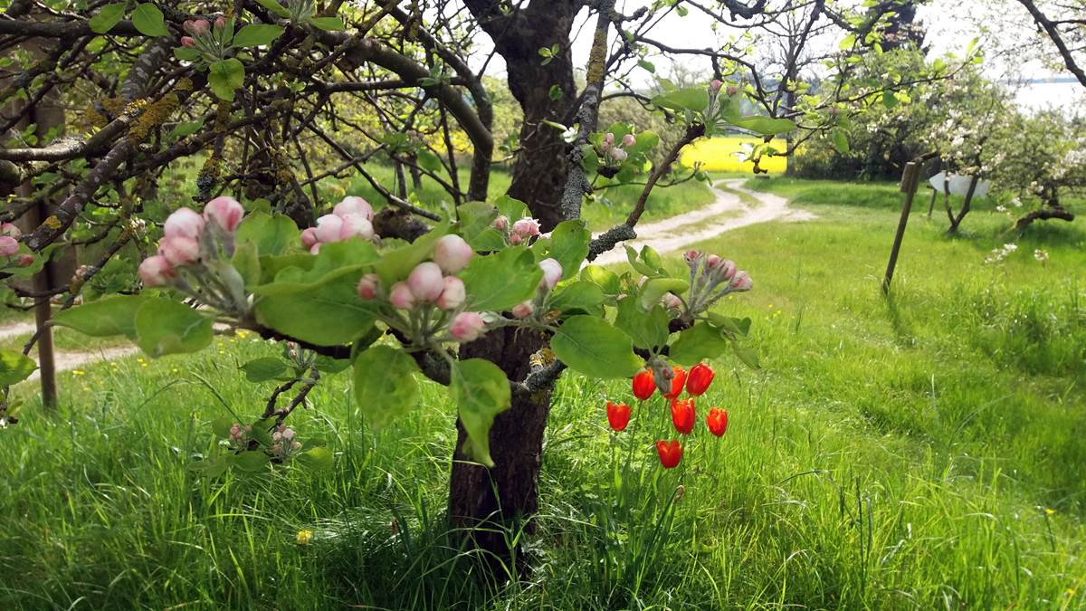 Frühling im Naturparadies