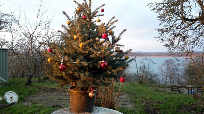Weihnachtsbaum im Naturparadies
